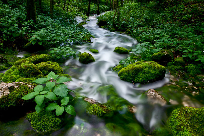 Green stream II